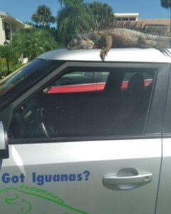 iguana control car 02