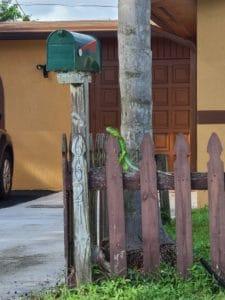 Iguana by the house
