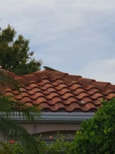 Iguana on the roof 06