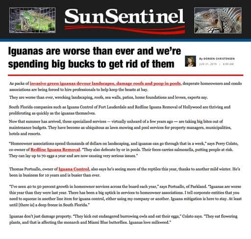 Iguanas are worse than ever