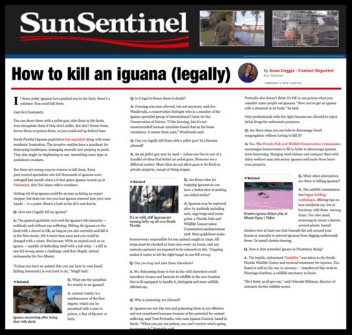 How to kill an iguana (legally)